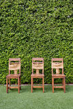 Decorate three wooden chairs against the green small tree wall. Stock Images