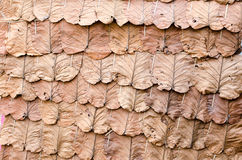 Decorate the walls with dry leaves Royalty Free Stock Image