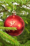 Decorated branch of Christmas tree Stock Image