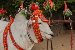 Decorated buffalo. Bagan, Myanmar. Close up Royalty Free Stock Photography