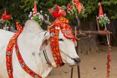 Decorated buffalo. Bagan, Myanmar. Close up Stock Photography