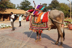 Decorated bull on Indian Hindu festival Stock Image