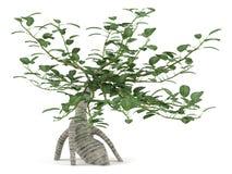 Decorated bush tree. Bonsai Stock Images