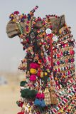 Decorated Camel Royalty Free Stock Images