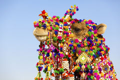 Decorated camel at Desert Festival. Decorated camel from the Desert Festival, Jaisalmer, India Royalty Free Stock Image
