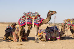 Decorated camel at Desert Festival in Jaisalmer, Rajasthan, India. Close up Royalty Free Stock Photography