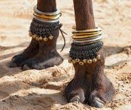 Decorated camel foot. Beautifully decorated camel foot at the Pushkar Fair in India stock photo