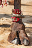 Decorated camel foot. Beautifully decorated camel foot at the Pushkar Fair in India stock photography