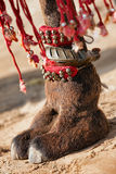 Decorated camel foot. Beautifully decorated camel foot at the Pushkar Fair in India royalty free stock image