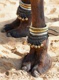 Decorated camel foot. Beautifully decorated camel foot at the Pushkar Fair in India royalty free stock photos