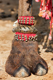 Decorated camel foot. Beautifully decorated camel foot at the Pushkar Fair in India stock images