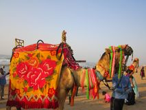 Decorated Camel at Puri Royalty Free Stock Photos