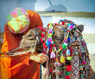 Decorated camel at the Pushkar fair. Rajasthan, India Royalty Free Stock Photography