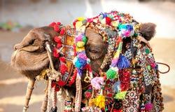 Decorated camel at the Pushkar fair. Rajasthan, India Royalty Free Stock Photo