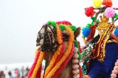Decorated camel at sea beach royalty free stock photos