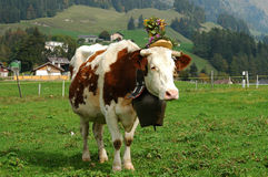 Decorated cattle. Bringing the cattle down from the mountain pastures Chateau d'Oex Berner Oberland Switzerland Stock Photo