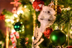 Decorated Christmas tree on blurred, sparkling and fairy background.  Stock Photography