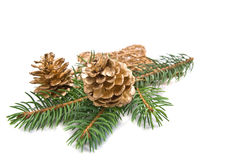 Decorated christmas tree branch Royalty Free Stock Images