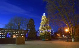 Decorated Christmas tree in the central square of the city. Decorated natural Christmas tree in the central square of the city in the late evening stock photography