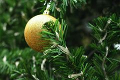 Decorated Christmas tree on the eve of Christmas day Royalty Free Stock Images