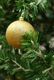Decorated Christmas tree on the eve of Christmas day Royalty Free Stock Image