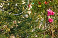 Decorated Christmas tree near the blossoming rose on the street in Mediterranean village Stock Photography