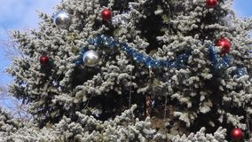 Decorated Christmas tree outdoor stock video footage