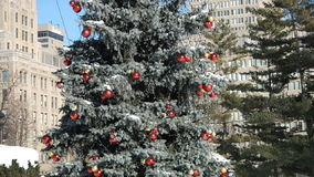 Decorated Christmas Tree in the park stock video footage