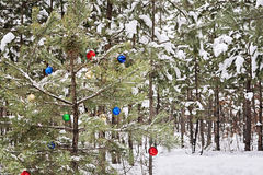 Decorated Christmas tree in a snowy pine forest Royalty Free Stock Image