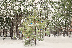 Decorated Christmas tree in a snowy pine forest Stock Photography
