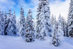 Decorated Christmas Tree in a Winter Landscape near the Village of Sun Peaks Royalty Free Stock Images