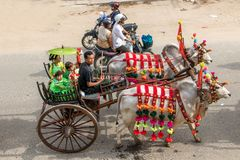 Decorated cow with cart at Buddhist Novitiation Ceremony, Burma. Stock Images