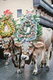 Decorated Cows in Austria Royalty Free Stock Photos