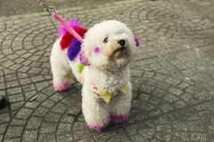 Decorated dog. Dog decorated with a harmless colors Royalty Free Stock Image