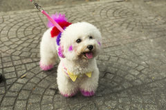 Decorated dog. Dog decorated with a harmless colors royalty free stock images