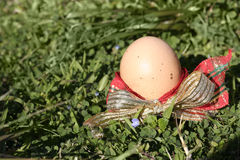 Decorated Easter Egg on grass Royalty Free Stock Photos