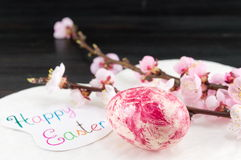 Decorated Easter eggs and cherry blossom tree Stock Images