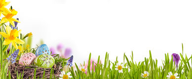 Decorated Easter eggs in a spring meadow Stock Photography