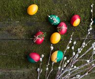 Decorated Easter eggs on wooden background. Decorated Easter eggs and willow lay on wooden background overgrown with moss Stock Photos