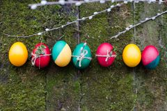Decorated Easter eggs on wooden background. Decorated Easter eggs and willow lay on wooden background overgrown with moss Royalty Free Stock Images