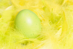 Easter egg and composition of feathers - symbols o Royalty Free Stock Photography