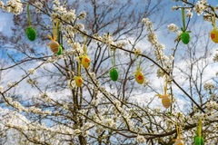 Decorated eggs for Easter are hanging on the blooming tree on the background of blue bright sky Stock Images