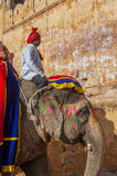 Decorated elephant at Amber Fort Royalty Free Stock Image