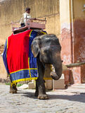 Decorated elephant carry driver  in  Amber Fort. JAIPUR, INDIA - SEPT 26: Decorated elephant carry driver  in  Amber Fort on Sept 26, 2013 in Jaipur, Rajasthan Royalty Free Stock Images