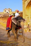 Decorated elephant going on the cobblestone path from Amber Fort. Near Jaipur, Rajasthan, India. Elephant rides are popular tourist attraction in Amber Fort royalty free stock image