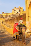 Decorated elephant going on the cobblestone path from Amber Fort Royalty Free Stock Images