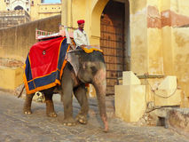 Decorated elephant going on the cobblestone path from Amber Fort. Near Jaipur, Rajasthan, India. Elephant rides are popular tourist attraction in Amber Fort Stock Photo