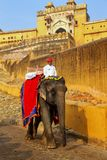 Decorated elephant going on the cobblestone path from Amber Fort. Near Jaipur, Rajasthan, India. Elephant rides are popular tourist attraction in Amber Fort stock photography