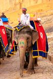 Decorated elephant going on the cobblestone path from Amber Fort. Near Jaipur, Rajasthan, India. Elephant rides are popular tourist attraction in Amber Fort Royalty Free Stock Photography