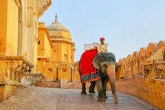 Decorated elephant going on the cobblestone path from Amber Fort. Near Jaipur, Rajasthan, India. Elephant rides are popular tourist attraction in Amber Fort Royalty Free Stock Photo
